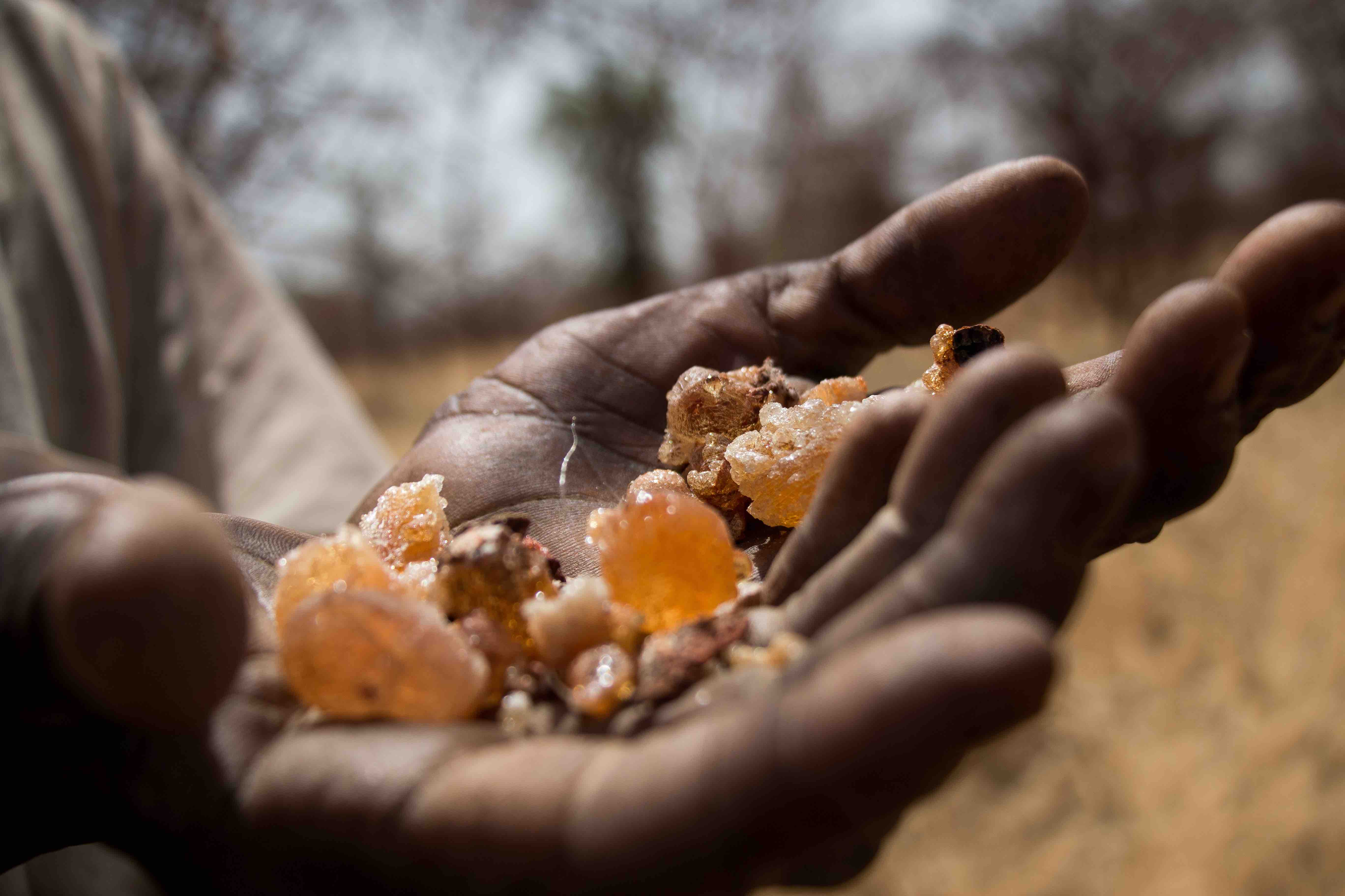 Blue Nile  Sudans Forgotten Front
